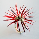 Sea Urchin Ring in Mixed Reds