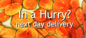 In a hurry? Items on next day delivery