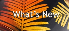 What's new - Sue Gregor Cuff